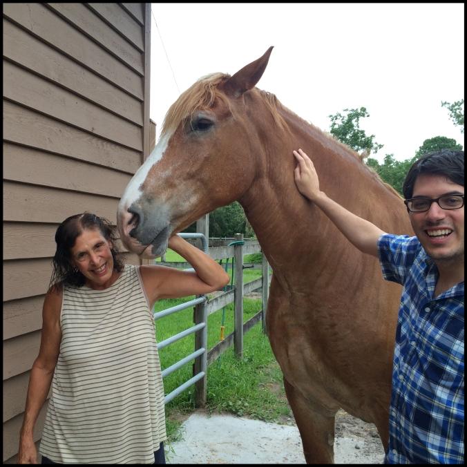 Meet Indy! An impressive 2,500lb logging horse.